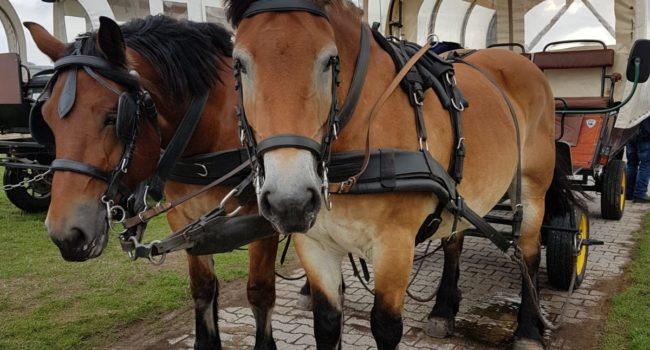Juist Pferdekutsche